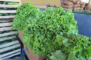 Fresh salad (fresh lettuce)