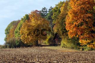 Herbstlicher Buchenwald, Schwäbische Alb, Württemberg