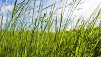 Green meadow in summer