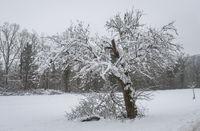 Winter time nearby Sittenhardt, Germany