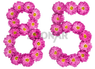 Arabic numeral 85, eighty five, from flowers of chrysanthemum, isolated on white background
