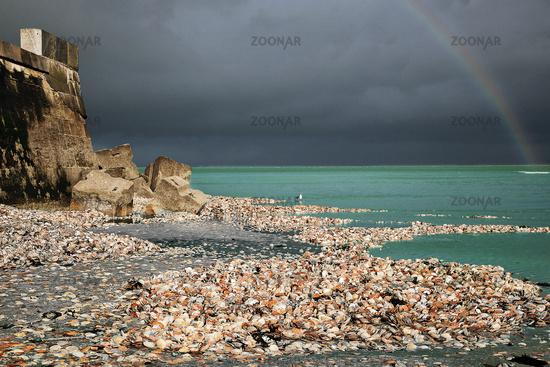 Mussel Coast, Port-en-Bessin-Huppain, Normandy, France