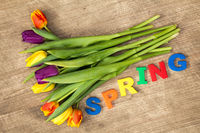 Lettering SPRING and colorful tulips