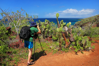 Man photographing Galapagos prickly pear on Rabida Island in Galapagos National Park, Ecuador