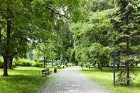 Green park in spring