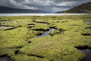 Saltmarsh in Scotland