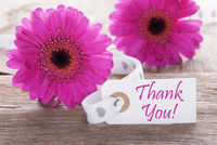 Pink Spring Gerbera, Label, Text Thank You