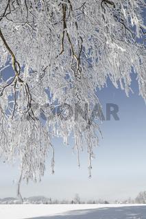 Blick durch tiefverschneite Äste auf die bayrische Landschaft im Winter.