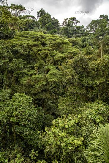 jungle in central america