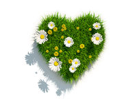 Valentine grass heart on white background