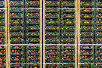 Stockroom Pallets Tomatoes
