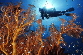 Buntsn Korallenriff und Taucher