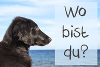 Dog At Ocean, Wo Bist Du Means Where Are You