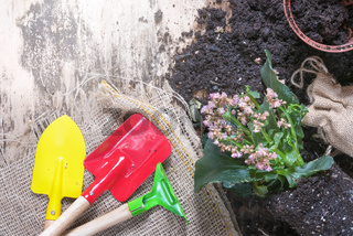 Gardening tools with flowers and soil
