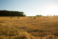 Evening after the Harvest