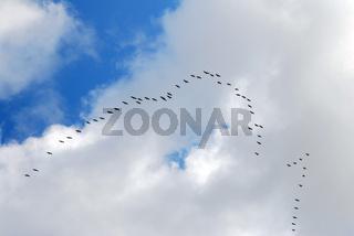 Formation von Kranichen am Herbsthimmel