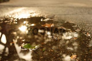 Blatt in einer Pfütze nach einem Regen im Sonnenlicht