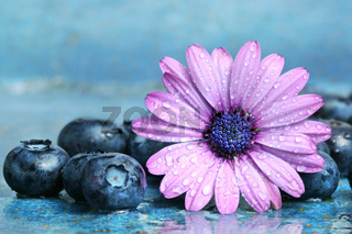Blueberries and daisy