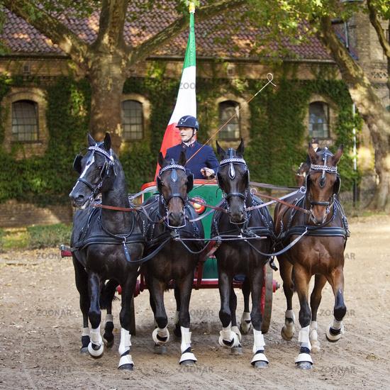stallion parade on Landesgestuet, Warendorf, Muensterland, North Rhine-Westphalia, Germany, Europe