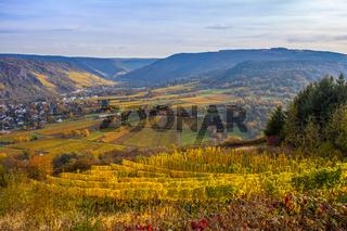 Weinberge Landschaft an der Mosel in  Goldenen Herbstfarben