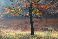 yellow autumn tree in sunlight