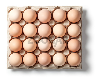 Chicken Eggs in Container