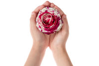 Child holding rose flower in hands