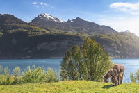 Pair of donkeys and spring alpine landscape