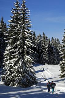 Aud Ski-Wanderung