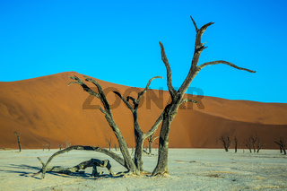 The ancient dried-up tree