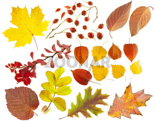 Set of design elements on a theme of autumn.