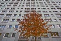 Baum vor Plattenbau | Tree before Plattenbau