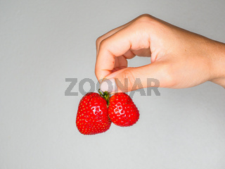 Female person holding a fresh red strawberries isolated towards gray