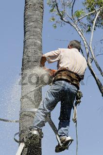 Spanien Holzfaeller und Palmenputzer