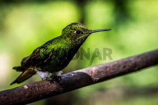 Hummingbird sitting on a branch