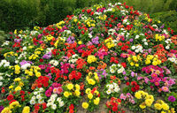 Flowers in the flowerbed