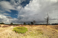 dry dead tree over stormy sky
