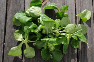 Valerianella locusta, Feldsalat, Corn salad