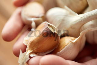 close up of woman hands holding garlic