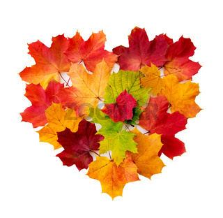 Heart from maple leaves isolated .