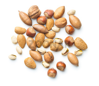 Different types of nuts in the nutshell.