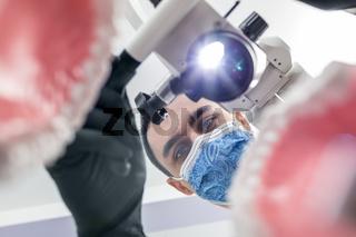 Dentist looks through jaw models