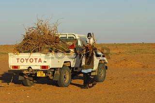 Brennholztransport in der Sahara