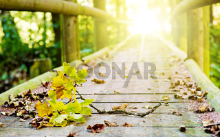 Wood bridge in autumn forest.