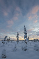 Winter landscape, Muddus National park, world heritage Laponia, Lapland, Sweden