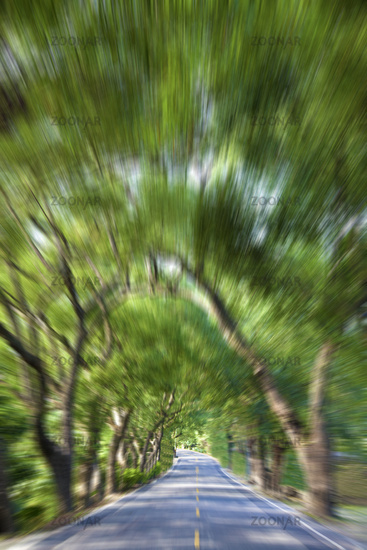 Driving through the Green Forest and road in motio