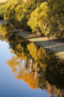Afternoon riverbank reflections
