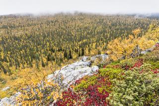 herbstliche Nebelstimmung, Lappland