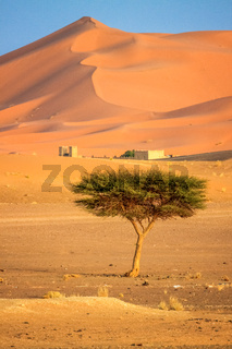 Lonely tree on a desert