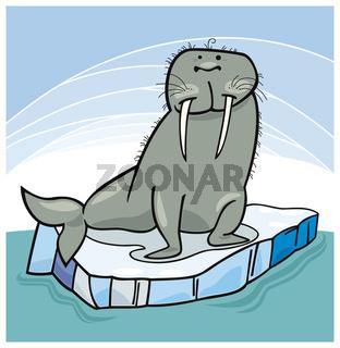 Walrus on floating ice